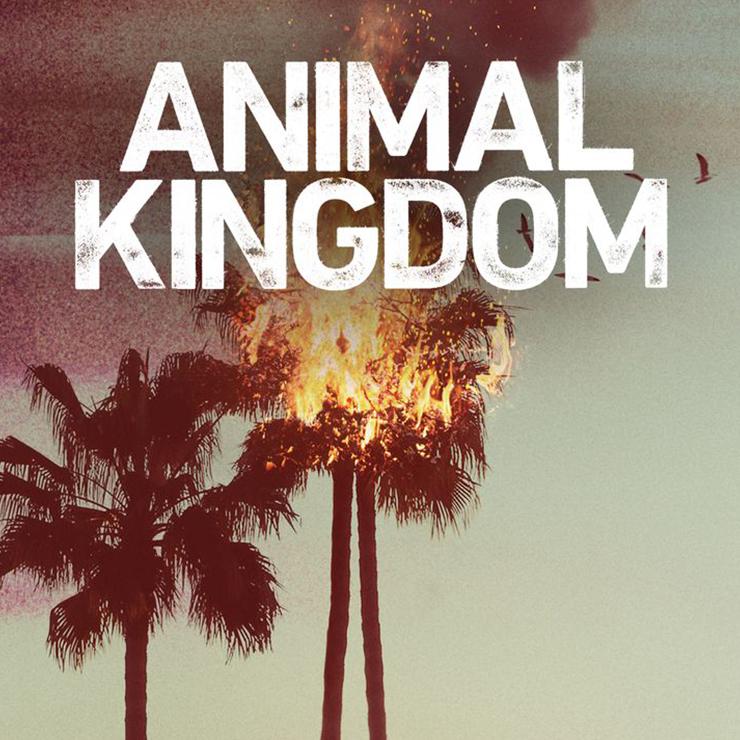 animal-kingdom.jpg