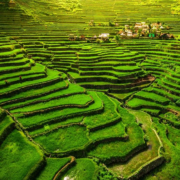 rice-terraces.jpg